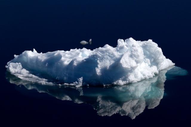 Ice 1359