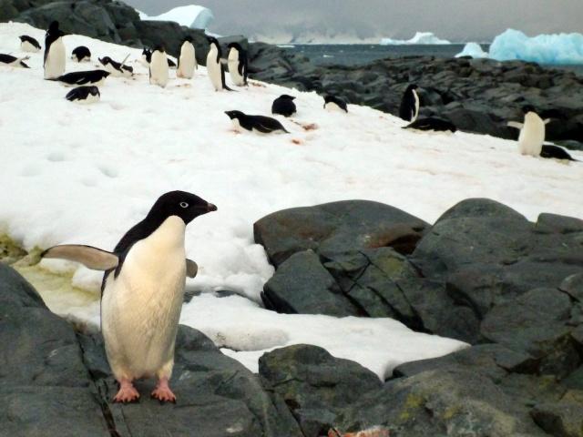 penguins 1367