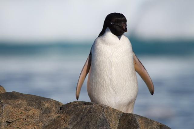 penguins 1369