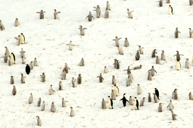 penguins 1373