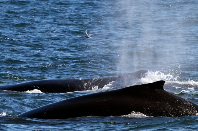 Whales 1362