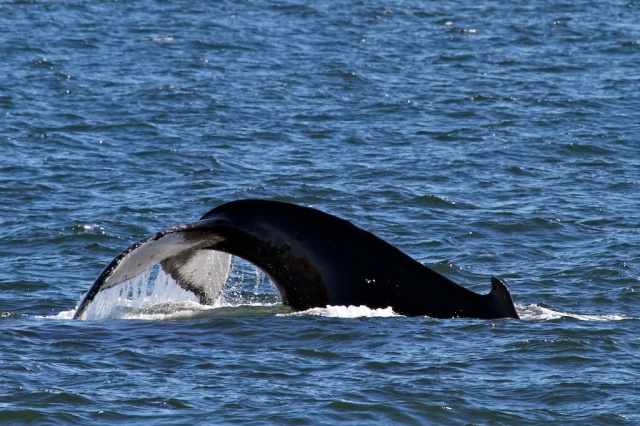 Whales 1363