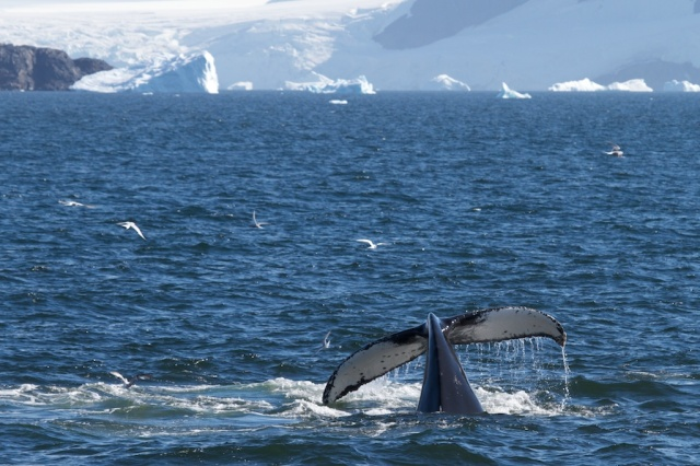 Whales 1364